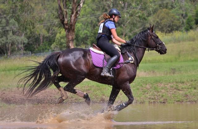 laura purvis gallop dark horse xc 1