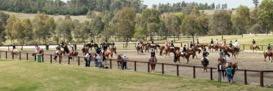 siec_horses_sand_area