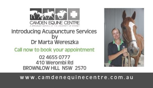 camden equine acupuncture